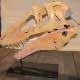 fossil6n-1-web