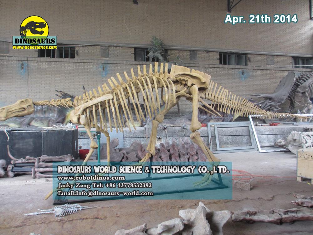 Hadrosaurs Fossils Replica