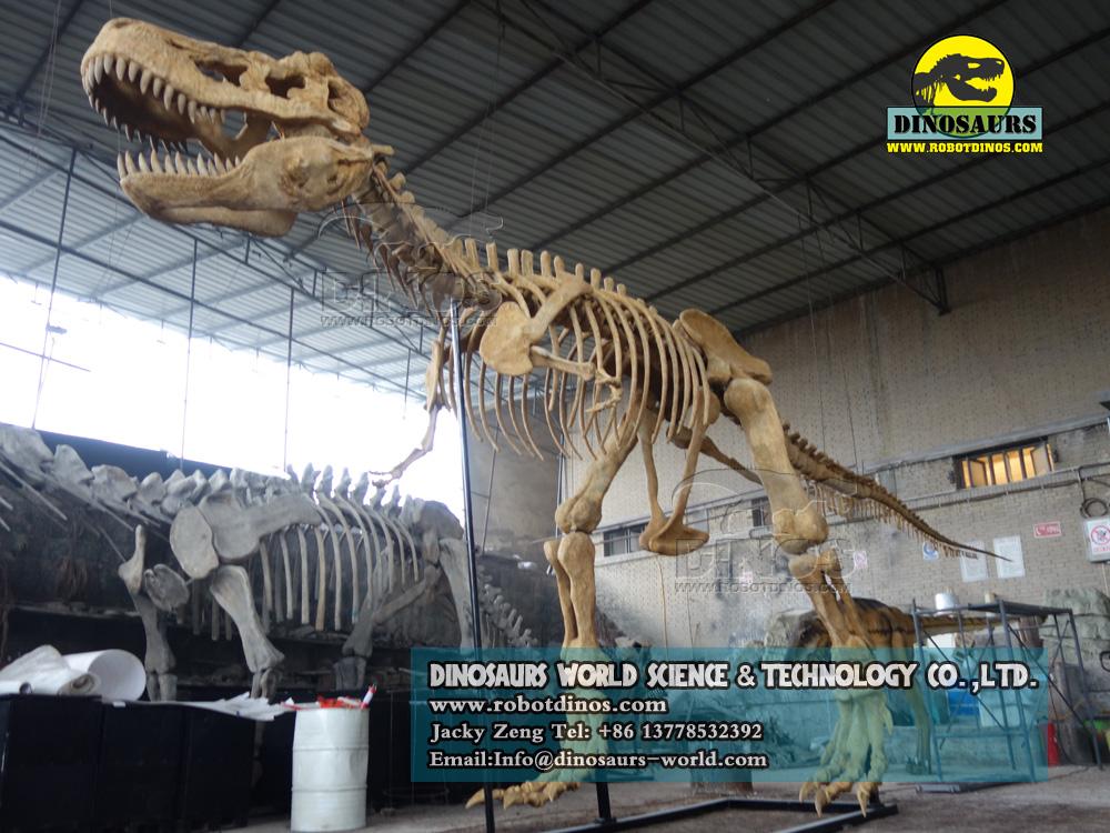 Fiberglass T-Rex Skeleton